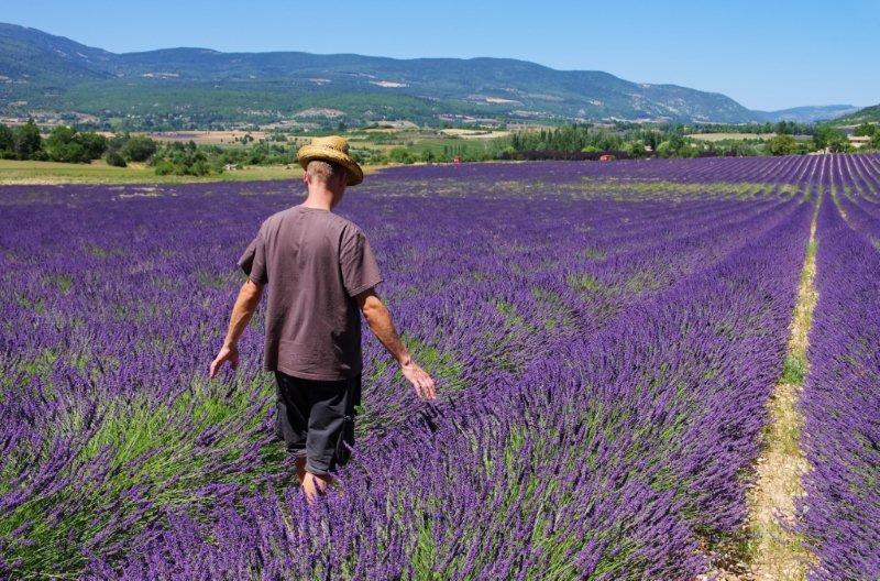 Francia provenza recolector - Casas en la provenza ...